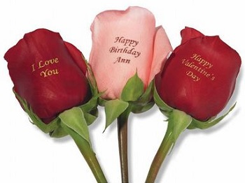 unique valentines roses